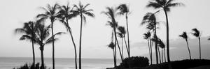Silhouette of Palm Trees at Dusk, Hawaii, USA