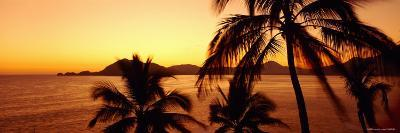 Silhouette of Palm Trees at Dusk, Manzanillo, Mexico--Photographic Print