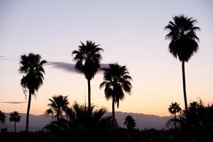 Silhouette of Palm Trees at Dusk, Palm Springs, Riverside County, California, USA