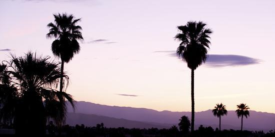 Silhouette of Palm Trees at Dusk, Palm Springs, Riverside County, California, USA--Photographic Print