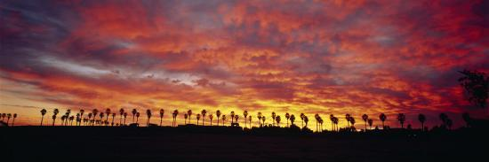 Silhouette of Palm Trees at Sunrise, San Diego, San Diego County, California, USA--Photographic Print