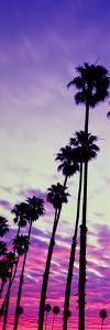 Silhouette of Palm Trees at Sunrise, Santa Barbara, California, USA