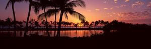 Silhouette of Palm Trees at Sunset, Anaehoomalu Bay, Waikoloa, Hawaii, USA