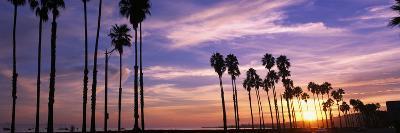 Silhouette of Palm Trees at Sunset, Santa Barbara, California, USA--Photographic Print