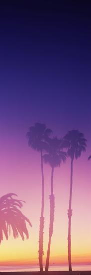Silhouette of palm trees on beach during fog at sunset, Santa Barbara, California, USA--Photographic Print