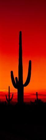 https://imgc.artprintimages.com/img/print/silhouette-of-saguaro-cactus-at-sunset-arizona-usa_u-l-pweuem0.jpg?p=0