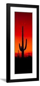Silhouette of Saguaro Cactus at Sunset, Arizona, Usa