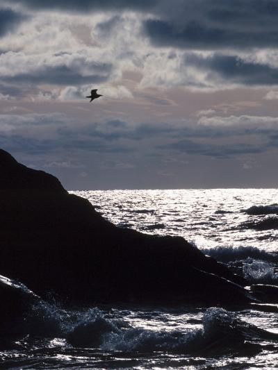 Silhouette of Seagull Flying Over Scenic Rocks and Water--Photographic Print