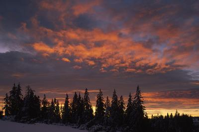 Silhouette of Spruce Trees over Dramatic Sky-Norbert Rosing-Photographic Print