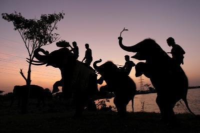Silhouette of Thai Mahouts and Elephants with One on the Left Holding Krathong-Rungroj Yongrit-Photographic Print