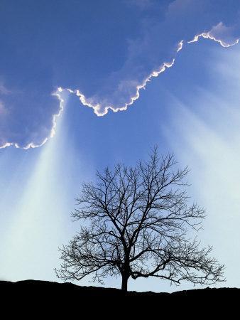 https://imgc.artprintimages.com/img/print/silhouette-of-tree-and-sky_u-l-p3hrgw0.jpg?p=0