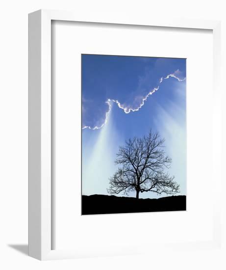 Silhouette of Tree and Sky-David Davis-Framed Photographic Print