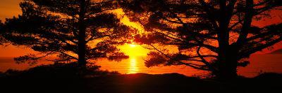 Silhouette of Trees on the Coast, Big Sur, California, USA--Photographic Print
