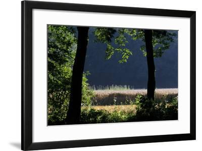 Silhouette of Two Trees at Moyland, Schloss - Germany-Florian Monheim-Framed Photographic Print