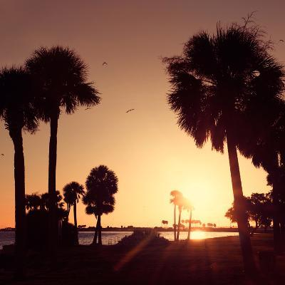 Silhouette Palm Trees at Sunset-Philippe Hugonnard-Photographic Print