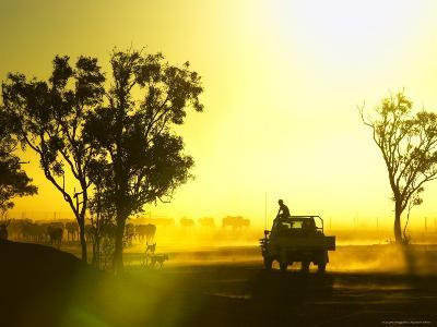 Silhouetted Cattle Muster at Sunset, Armraynald Station-Johnny Haglund-Photographic Print