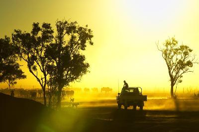Silhouetted Cattle Muster at Sunset, Armraynald Station.-Johnny Haglund-Photographic Print