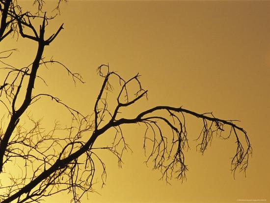 Silhouetted Dead Tree Branches against a Twilight Sky-Jason Edwards-Photographic Print