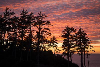 Silhouetted Fir Trees at Sunset, Ecola SP Near Cannon Beach, Oregon-Brian Jannsen-Photographic Print