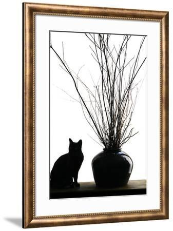 Silhouetted image of a cat by a flower pot, Los Angeles, California, USA.-Julien McRoberts-Framed Premium Photographic Print
