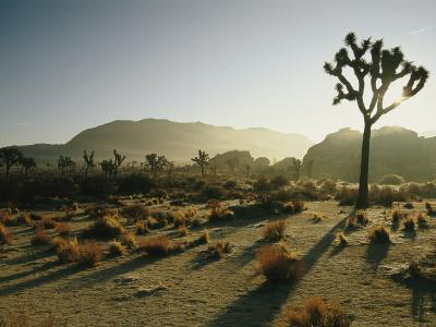 Silhouetted Joshua Trees at Twilight in the Desert-Kate Thompson-Photographic Print