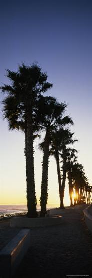 Silhouetted Palm Trees Along Surfers Point at Seaside Park-Rich Reid-Photographic Print