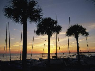 https://imgc.artprintimages.com/img/print/silhouetted-palm-trees-and-catamarans-line-a-shoreline-at-twilight_u-l-p4qkuv0.jpg?p=0