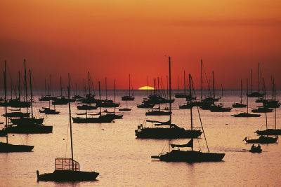 Silhouetted Sailboats in Darwin Harbor-Design Pics Inc-Photographic Print