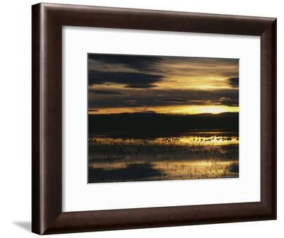 Silhouetted Sandhill Cranes in Marsh at Sunset-Marc Moritsch-Framed Photographic Print