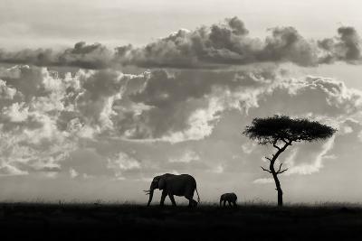 Silhouettes of Mara-Mario Moreno-Photographic Print
