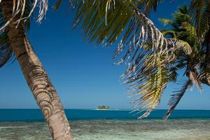 Silk Caye Island with Palm Trees, Caribbean Sea, Stann Creek District, Belize