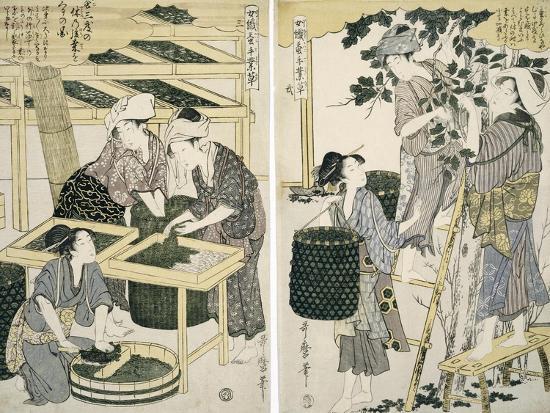 Silk-Worm Culture by Women-Kitagawa Utamaro-Giclee Print