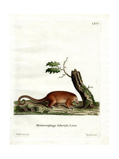 Silky Anteater--Giclee Print
