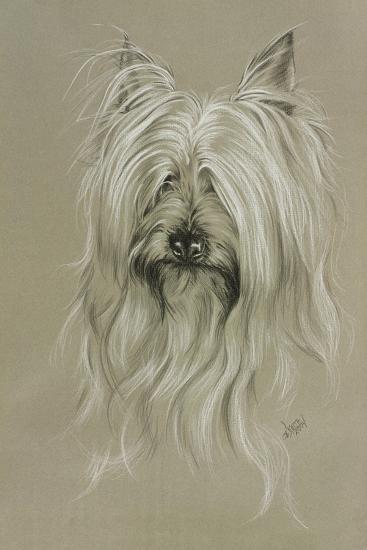 Silky Terrier-Barbara Keith-Giclee Print
