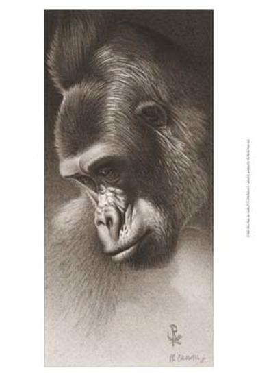Silver Back, the Gorilla-Robert L^ Caldwell-Art Print