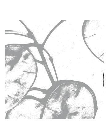 https://imgc.artprintimages.com/img/print/silver-dollars-i_u-l-f8ck580.jpg?p=0