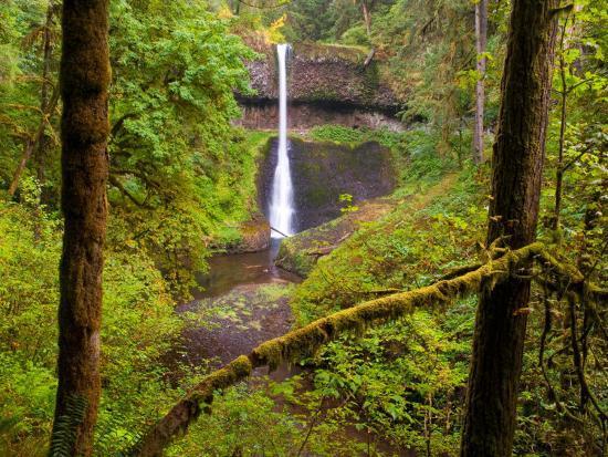 Silver Falls State Park, Salem, Oregon-Darrell Gulin-Photographic Print