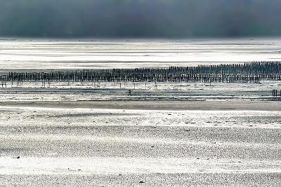 Silver Fish-Viviane Fedieu Daniel-Photographic Print