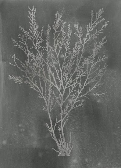 Silver Foil Algae I on Black-Jennifer Goldberger-Art Print