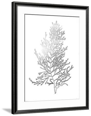 Silver Foil Algae IV-Jennifer Goldberger-Framed Art Print