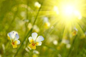 Spring Flowers Background by silver-john