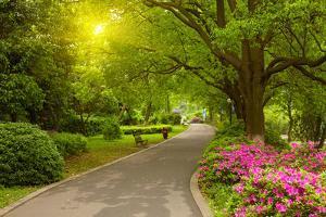 Summer Park Road by silver-john