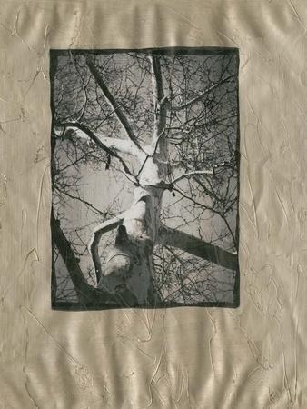https://imgc.artprintimages.com/img/print/silver-plate-birch-i_u-l-f560mb0.jpg?p=0