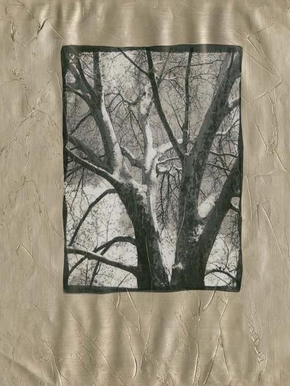 Silver Plate Birch II-Ethan Harper-Art Print