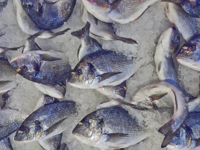 Silver Sea Bream for Sale at the Central Market- Dimitrios-Photographic Print
