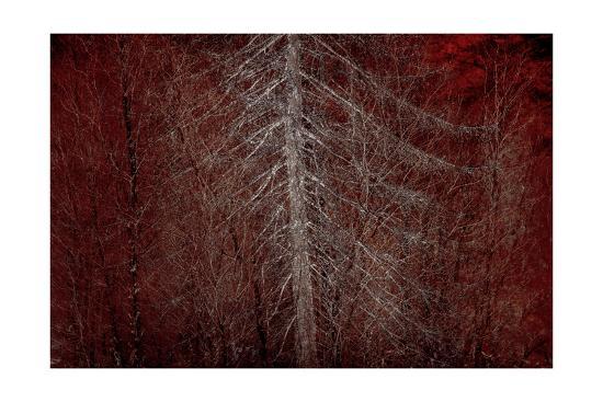 Silver Sentinel-Doug Chinnery-Photographic Print