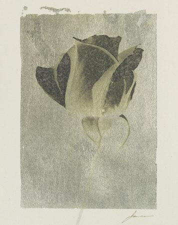 https://imgc.artprintimages.com/img/print/silver-stem-ii_u-l-f197w00.jpg?p=0