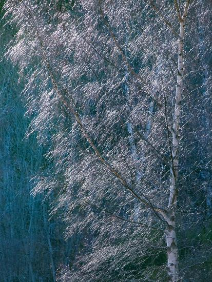 Silver Threads-Doug Chinnery-Photographic Print