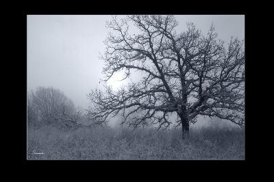 Silver Tone Buffalo River 1-Gordon Semmens-Giclee Print