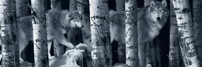 Silver Tone Moon Shadows 2-Gordon Semmens-Photographic Print